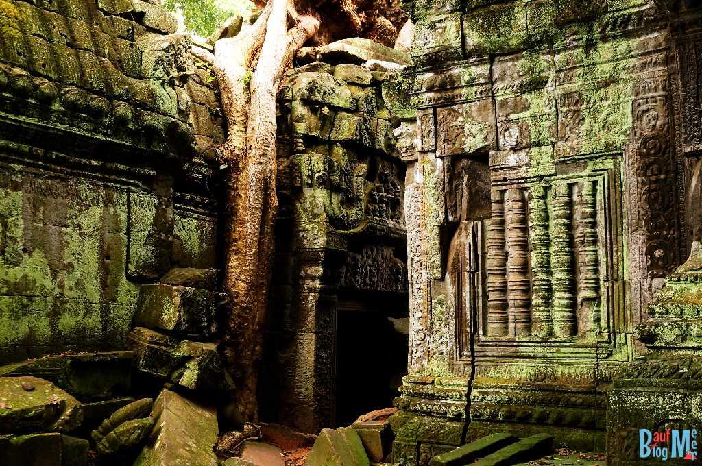 Moos und grüne Flechte auf den Relief Ruinen des Ta Prohm.