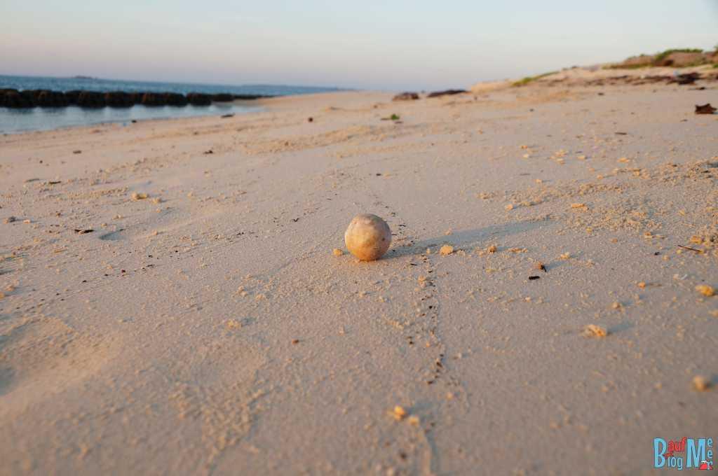 Manche Eier werden übersehen und werden dann zum Tierfutter am Strand...