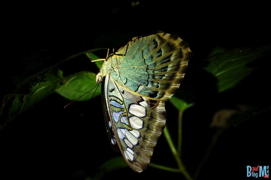 Schlafender Schmetterling