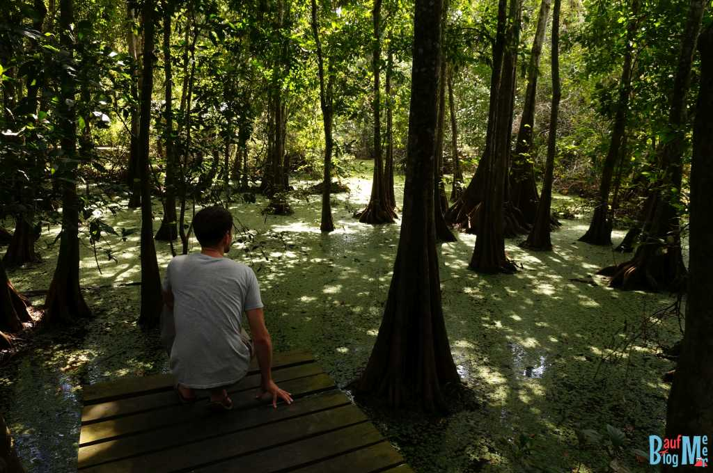 Sumpf im Camp am Kinabatangan River