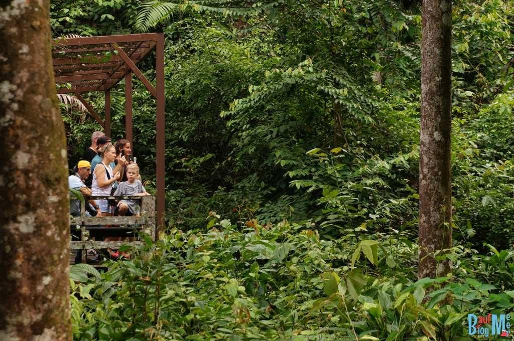 Touristen beim Beobachten der Orang-Utans in Sepilok