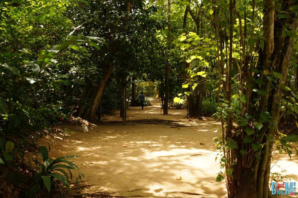 Weg zum Camp am Kinabatangan River