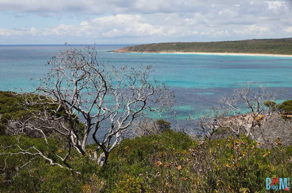 Toter Baum mit silbgrigen Ästen vor Küsten Hintergrund