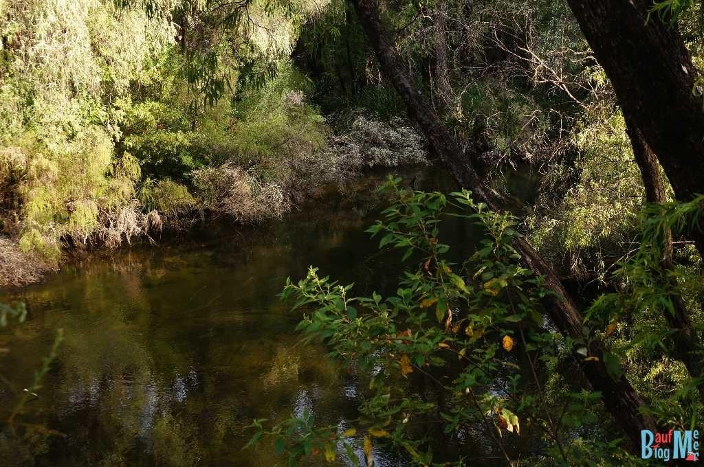Blick vom Spaziergang auf den Collie River