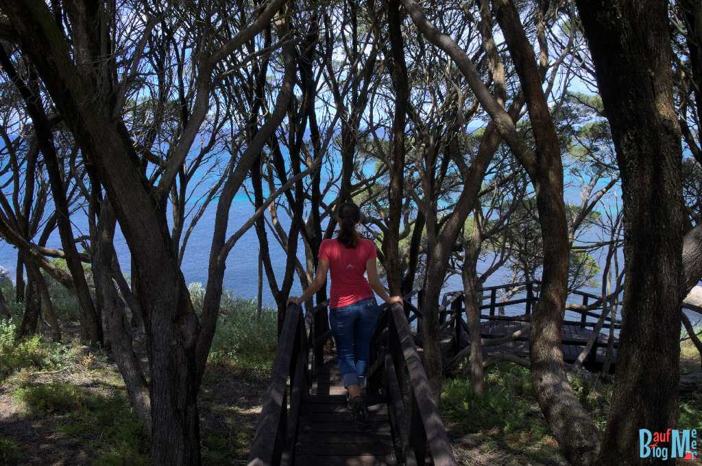 Aussichtspunkt beim Shelly Cove