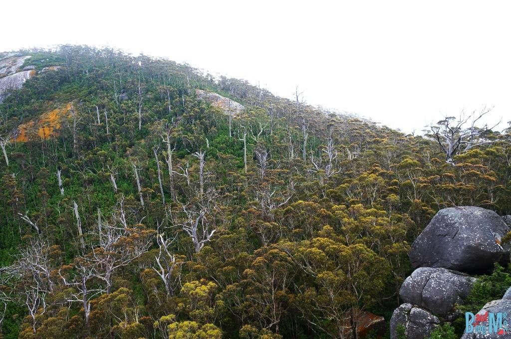 Ausblick auf die umgebenden Wälder vom Granite Skywalk aus