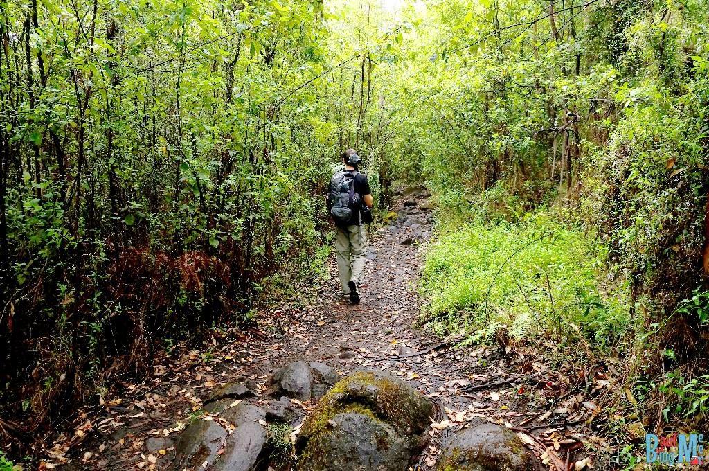 Wandern im Porongurup Nationalpark: Pfad auf der Wanderung zum Granite Skywalk