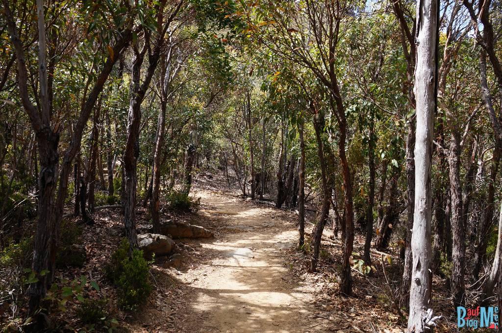Wanderweg durch Wald vor dem Aufstieg auf den Bluff Knoll