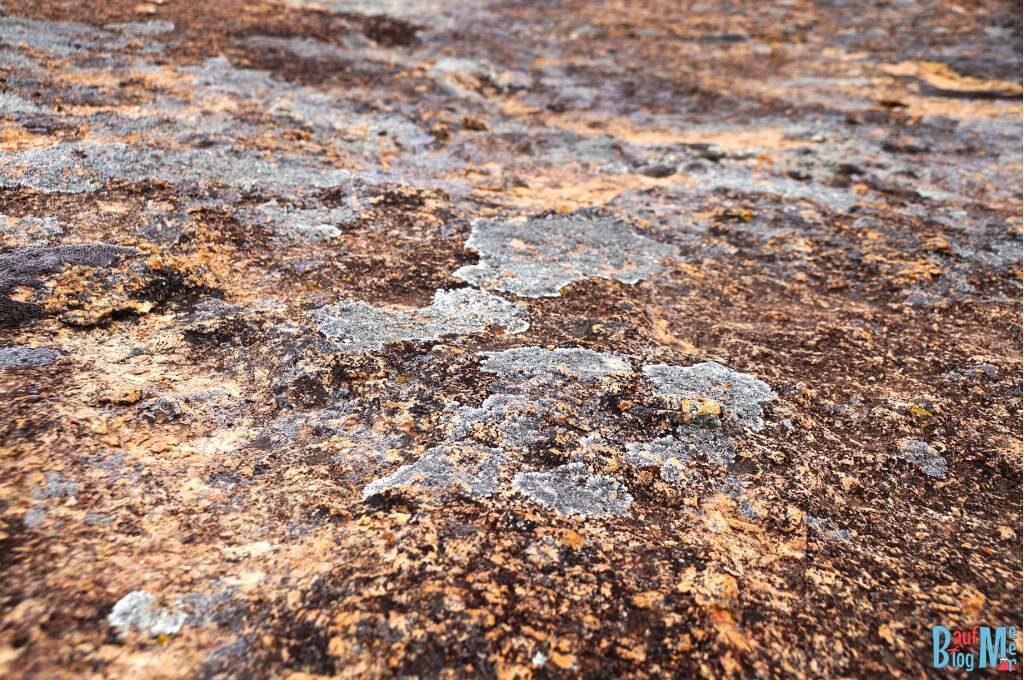 Flechten auf dem Kokerbin Rock