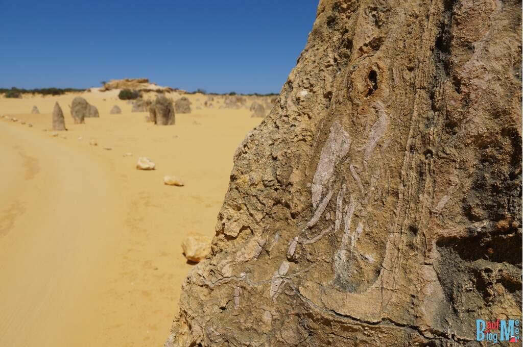 Fossil in einem Pinnacle Kalkstein