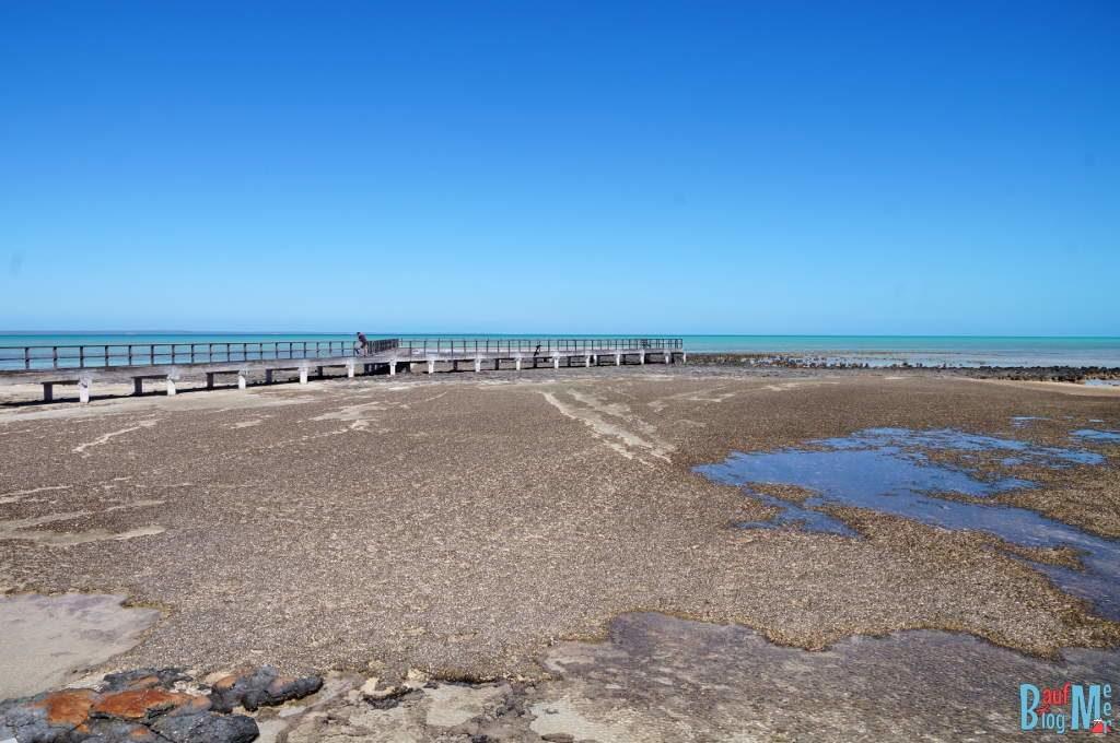 Buschigen Matten (tufted mats) Stromatolithen