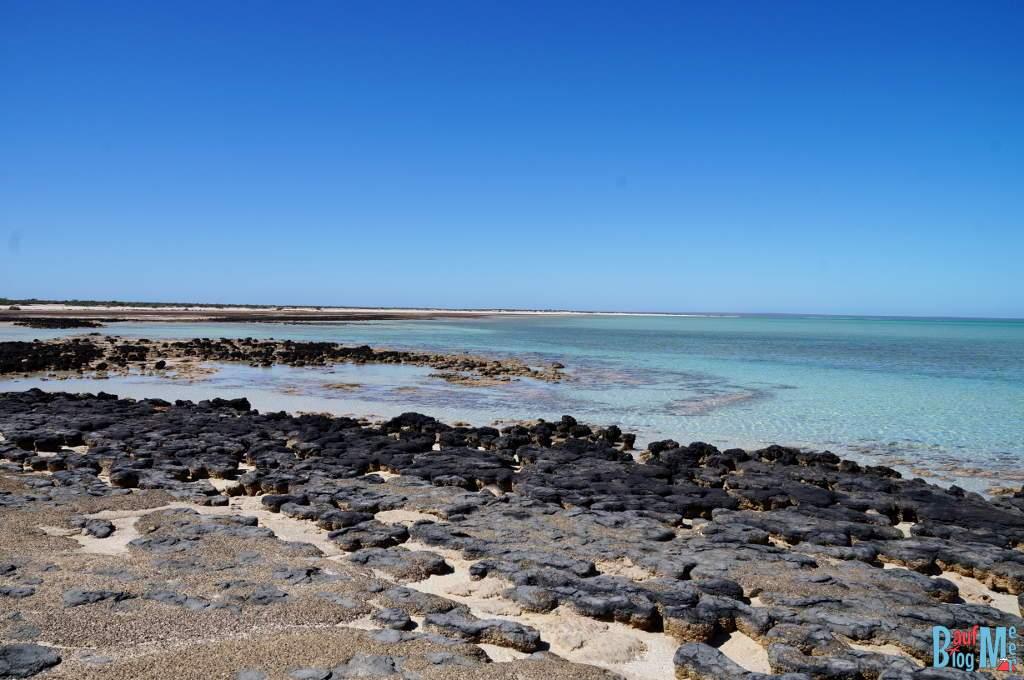 Stromatolithen am Hamelin Pool bei Ebbe