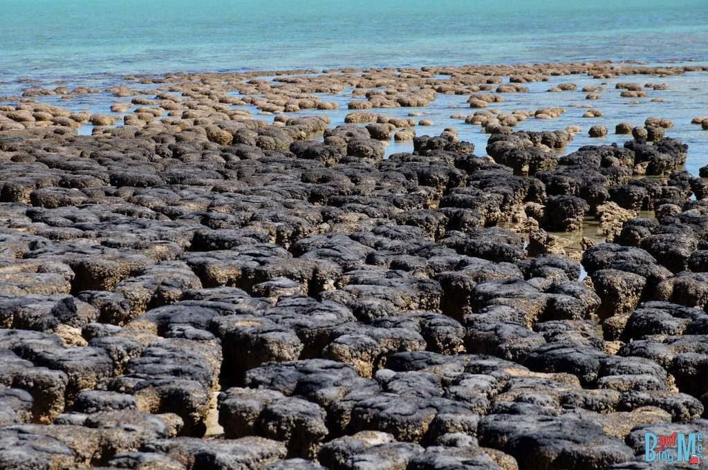 Stromatolithen bei Ebbe