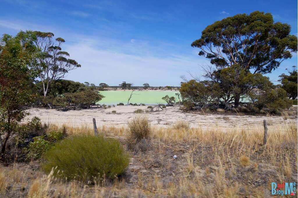 Grüner Salzsee im goldenen Outback