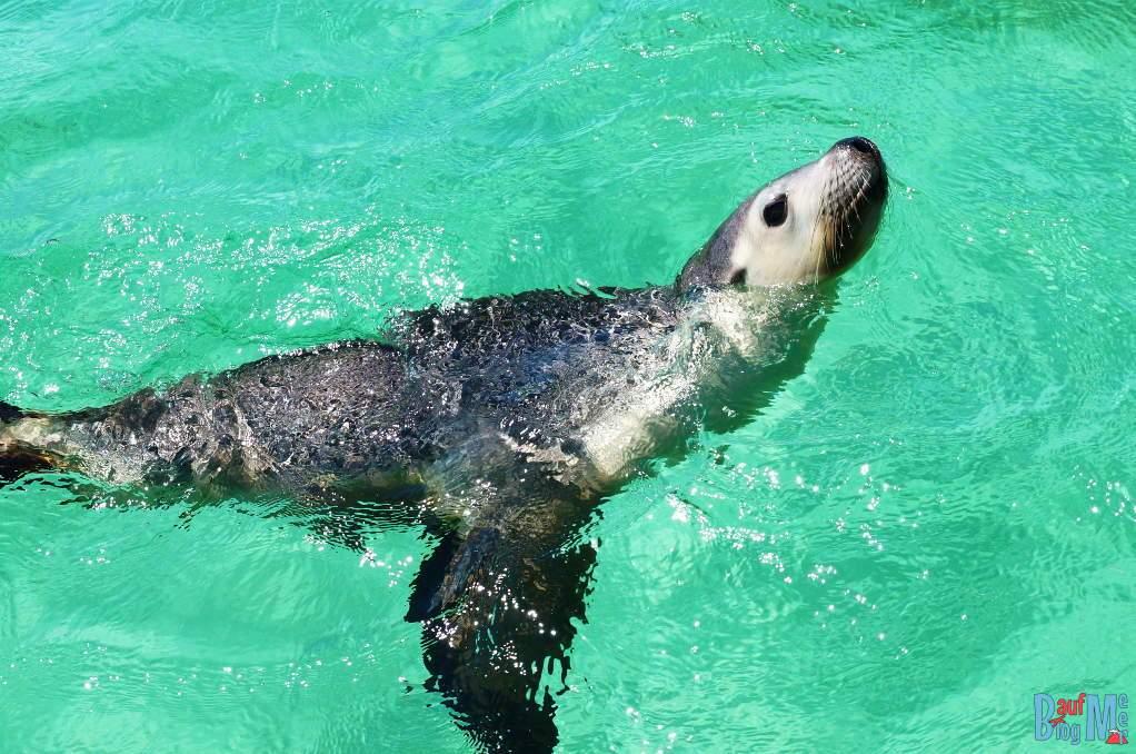 """""""Wann kommt ihr endlich in Wasser"""" fragte uns der Seelöwe"""