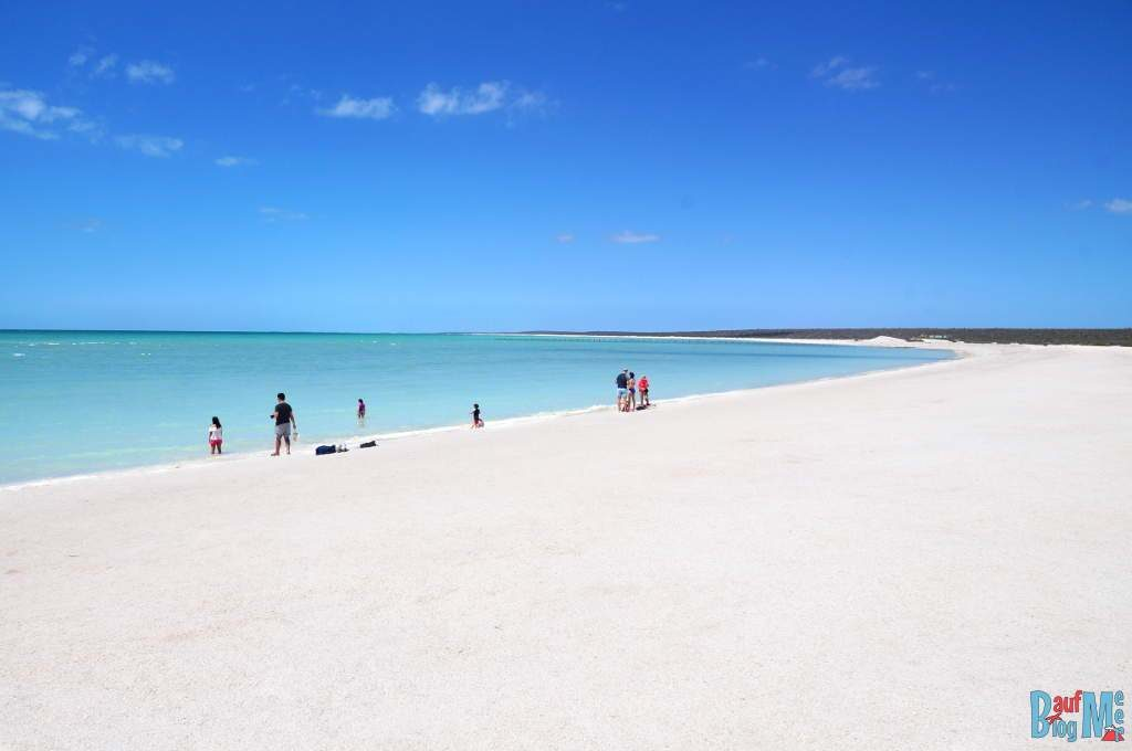 Strand komplett aus Muscheln: Der Shell Beach