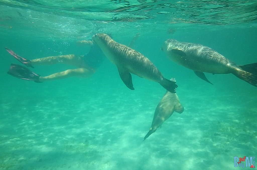 Anna beim Schnorcheln mit Seelöwen