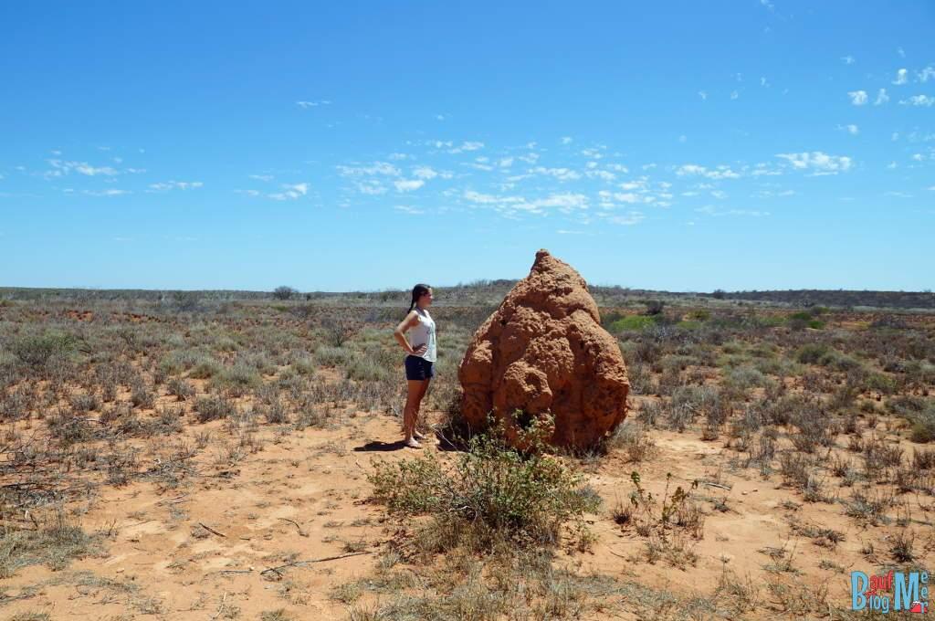 Riesen Termitennest