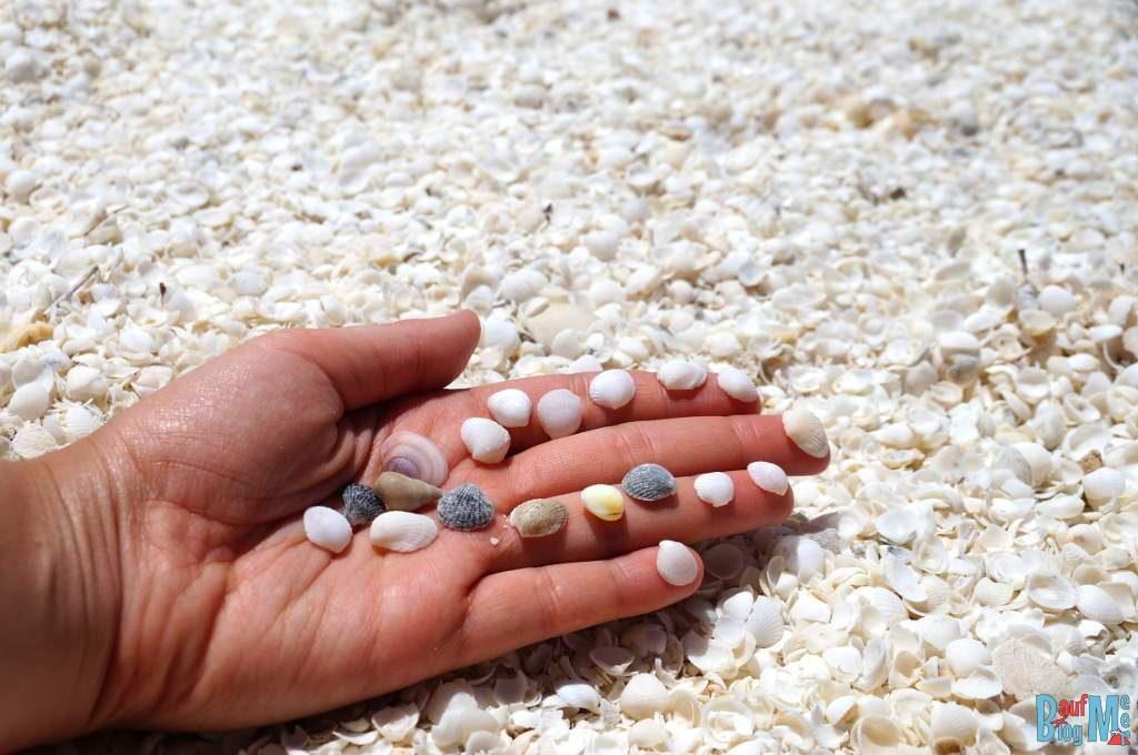 Doch auch unterschiedlichste Muscheln am Strand von Shell Beach