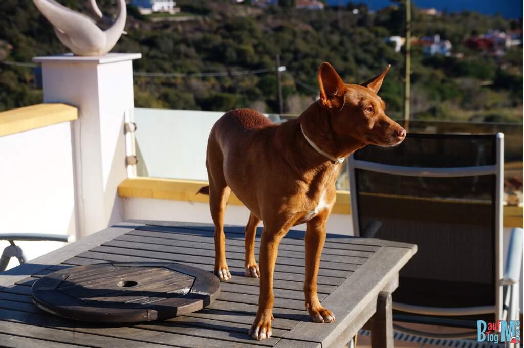 House Sitting Erfahrung: Ganz liebe Hunde