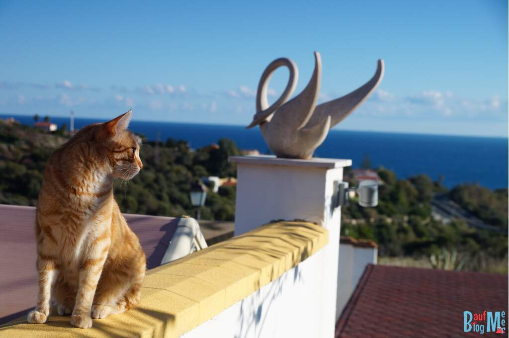 Erste House Sitting Erfahrung: viele liebe Katzen
