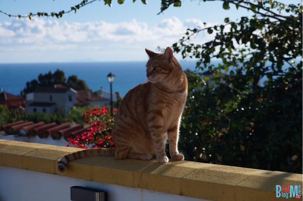 Katze auf einer Mauer beim House Sitting in Andalusien