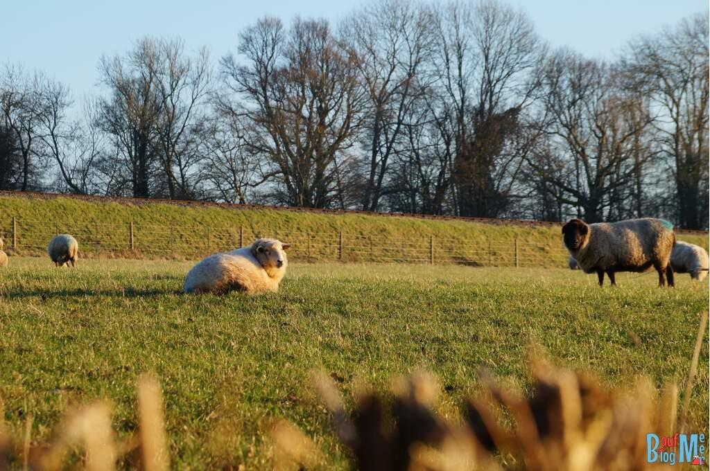 So haben wir uns England vorgestellt: Schafe auf einer Wiese in Süd-England