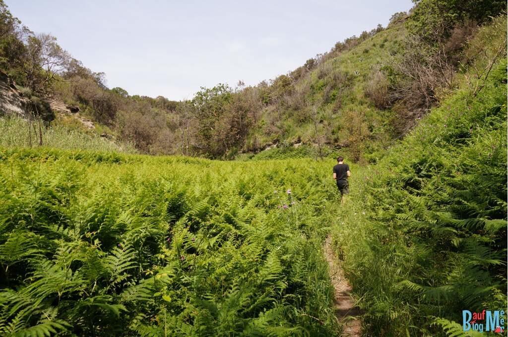 Wanderweg durch Feld zur Pelara Bucht auf Ischia