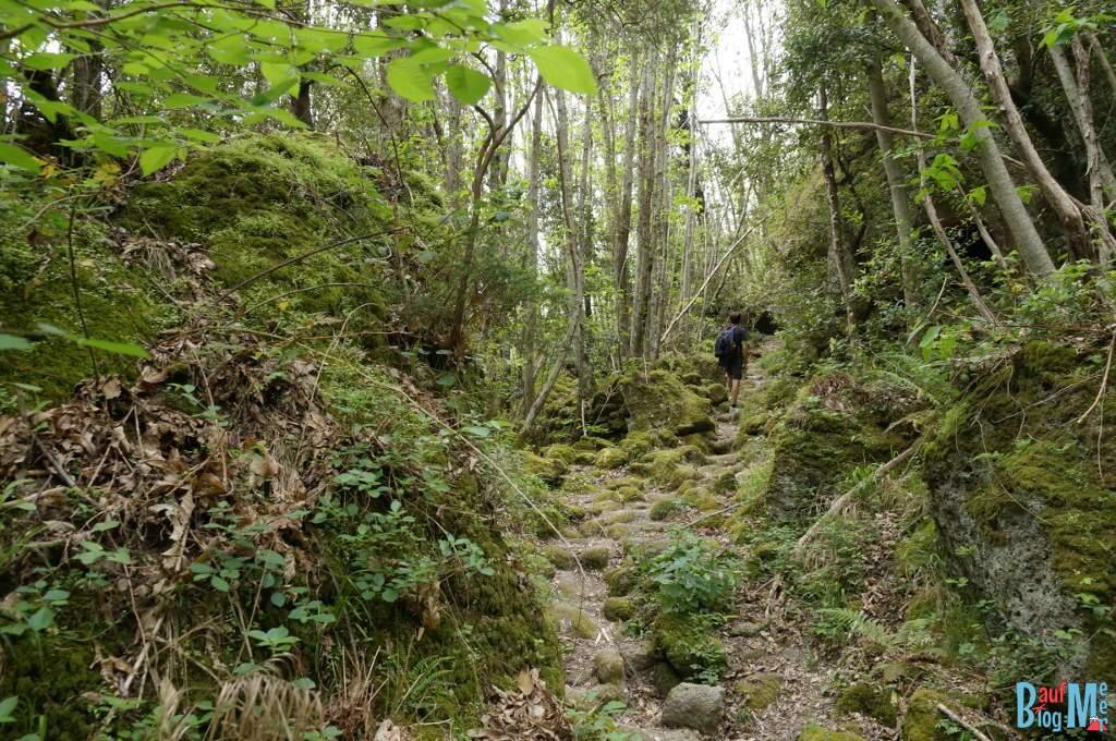 Wanderwege im Wald von Falaga Ischia