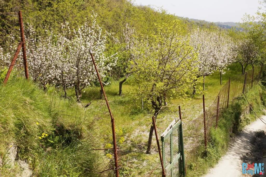 Obstgärten bei der Wanderung rauf zum Epomeo, dem höchsten Gipfel der Insel Ischia