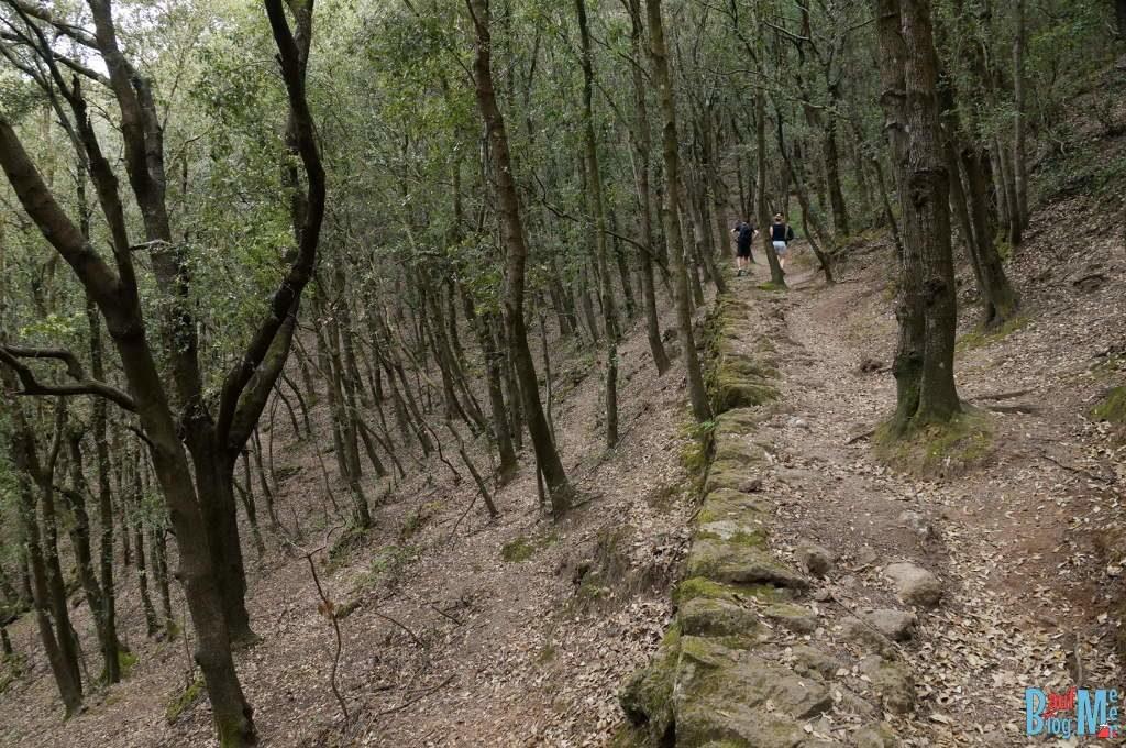 Wald im Krater auf der italienischen Insel Ischia
