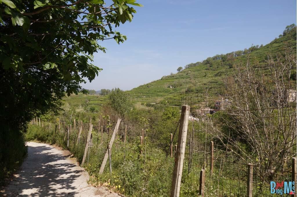 Wanderung bei Scarrupata auf der Insel Ischia (Italien)