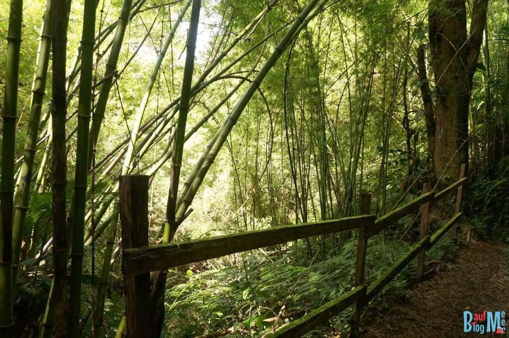 Bambuspfad auf dem Sendero los Quetzales