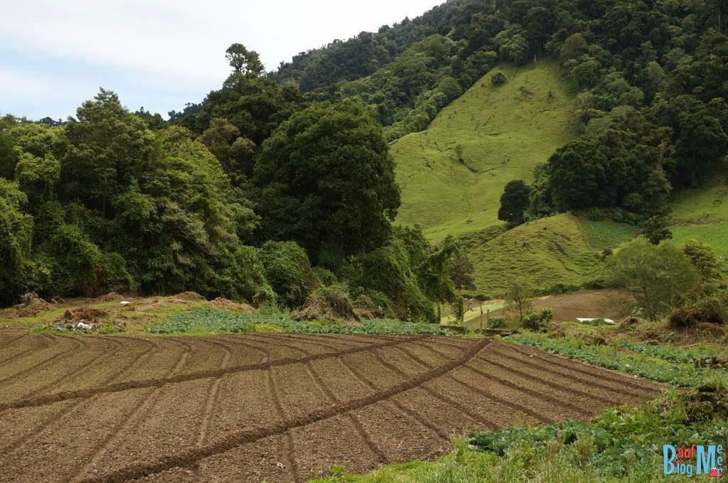 Felder auf dem Weg zum Sendero los Quetzales