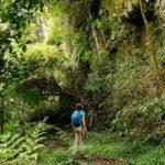 Farne und Felsen auf dem Sendero los Quetzales