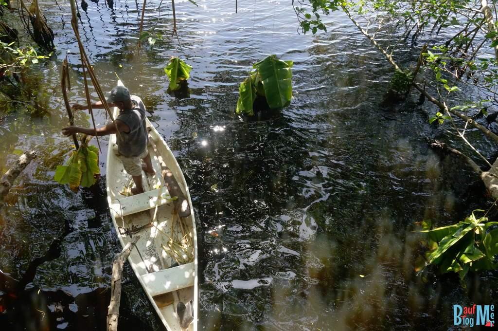 Mitarbeiter beim Anbringen der Bananen und Bananenblätter als Lockmittel für die Seekühe