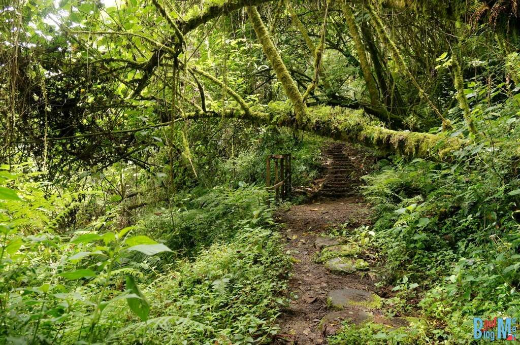 Ein Pfad auf dem Sendero los Quetzales