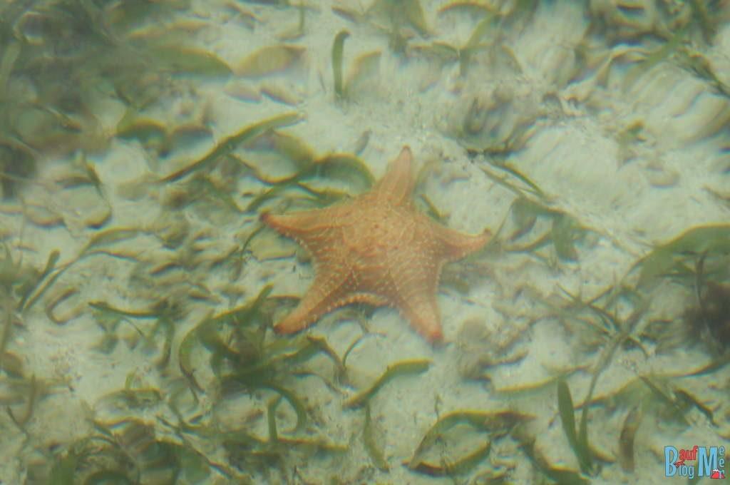 Nachhaltigkeit auf Bocas del Toro: Orangene Seesterne nicht aus dem Wasser nehmen