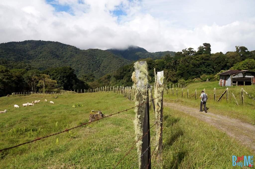 Felder auf dem letzten Abschnitt des Sendero los Quetzales