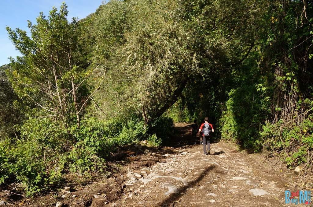 Weg beim Abstieg vom Volcan Baru