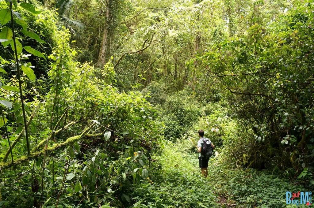 Dichte Wege auf dem Sendero los Quetzales