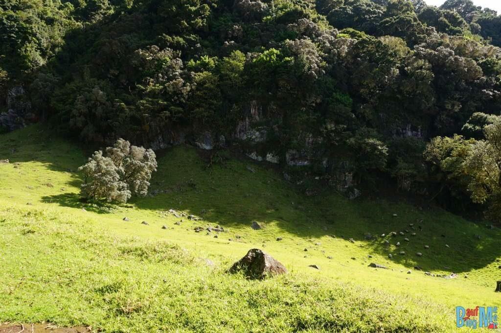 Wiese, Schafe und Felsen auf Volcan Baru