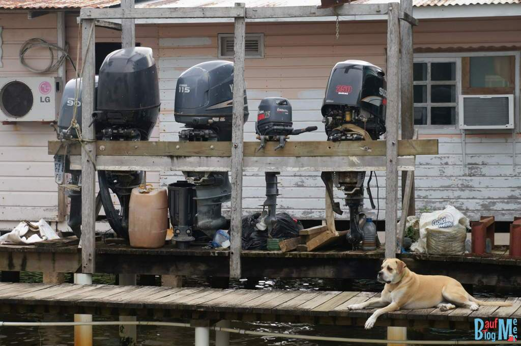Hund und Bootsmotoren im Wohngebiet bei der Saigon Bay auf Bocas del Toro zur Regenzeit