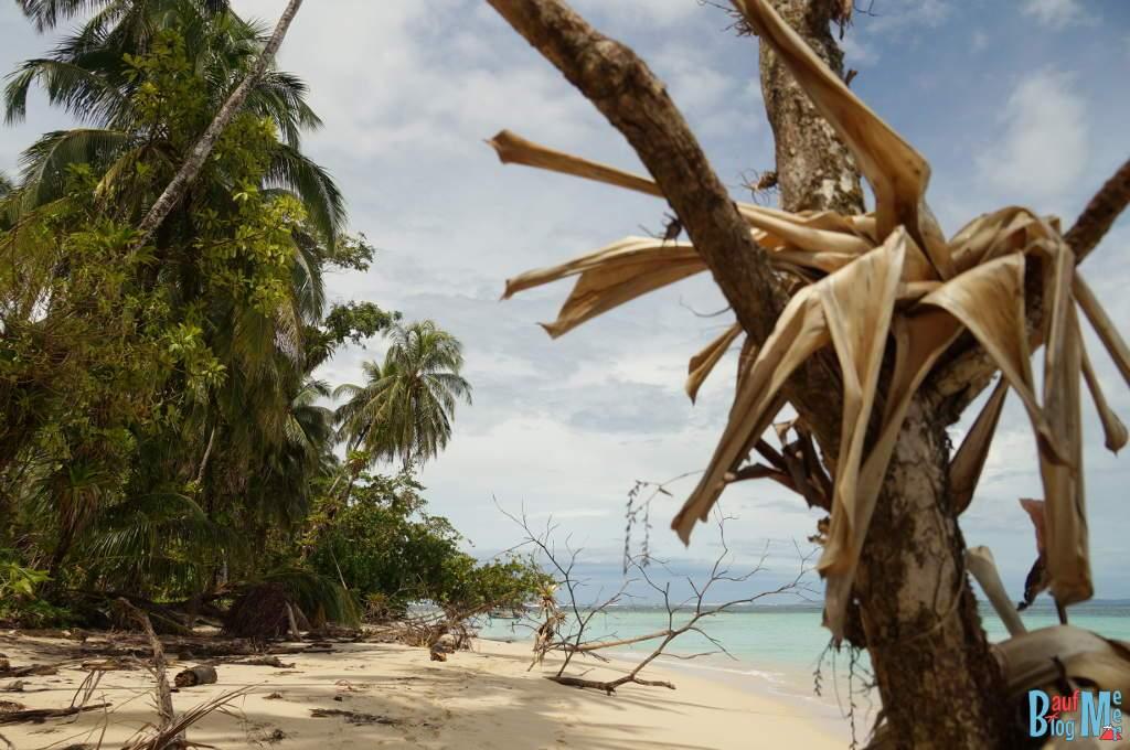 Spaziergang auf der Insel Zapatilla, Bocas del Toro zur Regenzeit