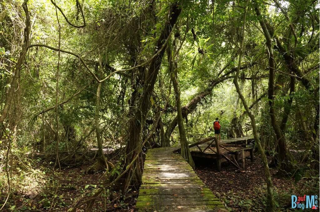 Plankenweg auf Zapatilla Bocas del Toro zur Regenzeit