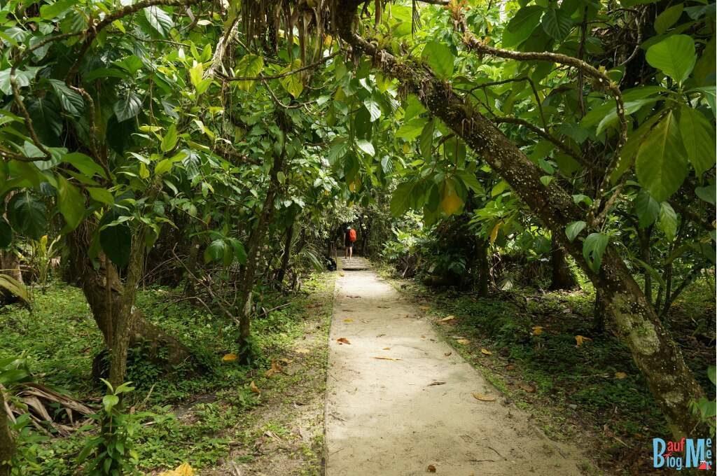 Bromelien Pfad auf Zapatilla, Bocas del Toro zur Regenzeit