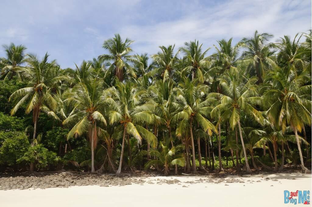 Palmen auf der Isla Bolana im Golf von Chiriqui