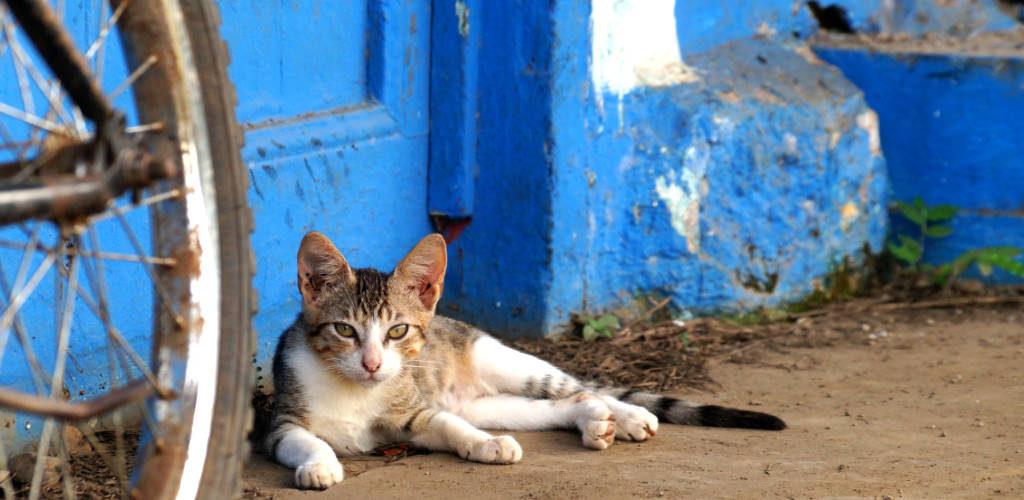 Damit du nicht faul rumsitzen musst wie die Katze: Wann ist die beste Reisezeit für Panama?