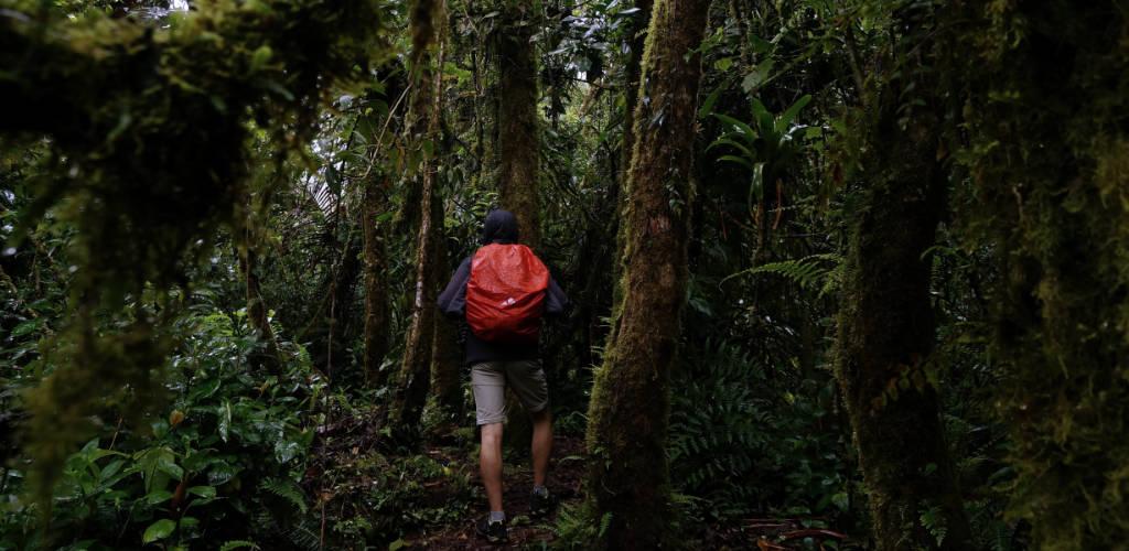 Reisezeit Panama: Wandern zur Regenzeit im La Amistad Nationalpark