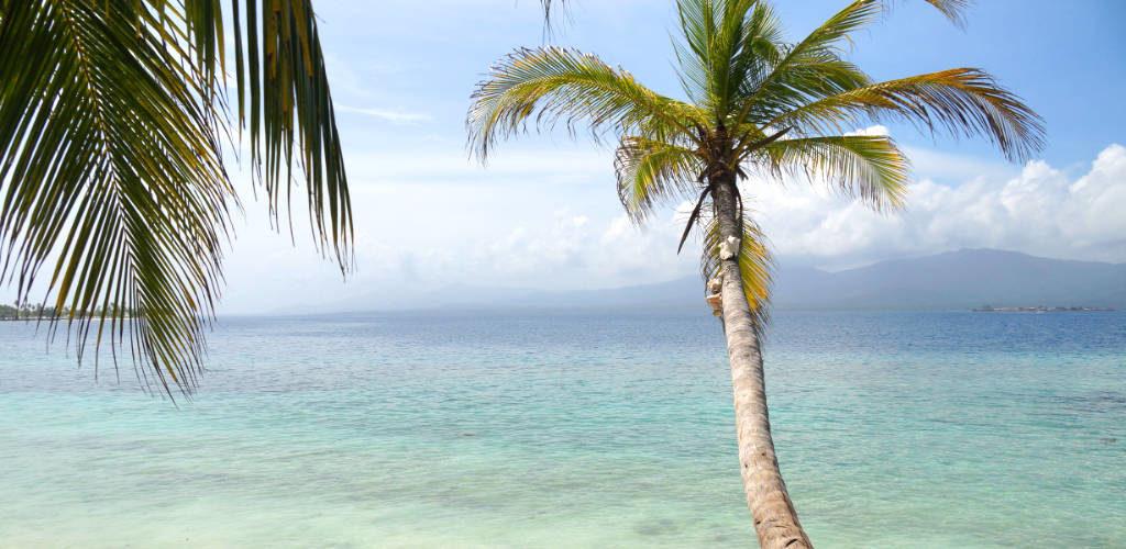 """Reisezeit Panama: Palme auf den San Blas Inseln zur """"Regenzeit"""""""